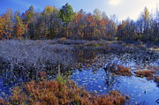 Lucia Vicari - Great Swamp in Fall