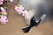 Pink Flower Branch Prints - Great Tit Print by By Giseong Na