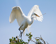 Wading Bird Photos - Great White Egret by Bill Swindaman