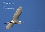 Great Birds Posters - Great White Egret Holiday Card Poster by Sabrina L Ryan