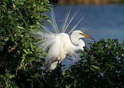 Colorful Contemporary Art - Great White Egret in the Trees by Sabrina L Ryan