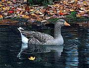 Bird Art - Great White-fronted Goose by Brent Ander