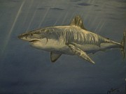 Sharks Paintings - Great White Shark by Alexandros Tsourakis