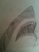 Elise Parr - Great White Shark