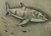Sharks Pastels - Great White by Tyler Hendrick