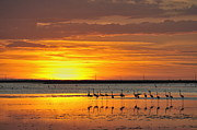 Flock Of Bird Art - Greater flamingos in pond at sunset by Sami Sarkis