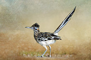 Roadrunner Framed Prints - Greater Roadrunner 2 Framed Print by Betty LaRue