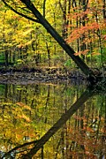 """autumn Reflection"" Photos - Greater Than by Robert Harmon"