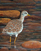 Sandpiper Painting Framed Prints - Greater Yellowlegs Framed Print by Dee Carpenter
