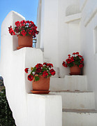 Geraniums Framed Prints - Greek steps  Framed Print by Jane Rix
