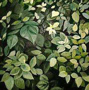 Bush Pastels - Green 1 by John Busuttil Leaver