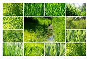 Impression Prints - Green 2 Print by Kristin Kreet