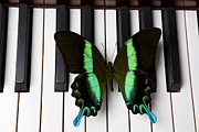 Keyboards Prints - Green and black butterfly on piano keys Print by Garry Gay