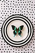 Vertical Flight Prints - Green and black butterfly on plate Print by Garry Gay