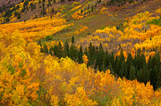 Fall Colors Photos - Green and Gold by Tim Reaves