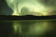 Aurorae Acrylic Prints - Green And White Streamers Of Aurorae Acrylic Print by Paul Nicklen