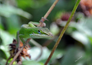 Kay Lovingood Art - Green Anole by Kay Lovingood