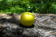 Fruit Tree Art Photos - Green Apple by David Lee Thompson