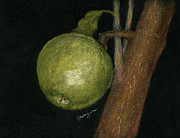 Fruit Tree Art Pastels - Green Apple by Flo Hayes
