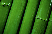 Backgrounds Metal Prints - Green Bamboo Metal Print by Megan Ahrens