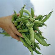 Green Bean Posters - Green Beans Poster by David Munns