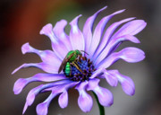 Bright Colors Art - Green Bee Electrified by Carol Groenen