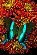 Red Flowers Art - Green blue butterfly by Garry Gay