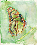 Linda Pope Posters - Green butterfly Poster by Linda Pope