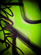 Signed Photo Prints - Green Challenge			 Print by Dan Julien