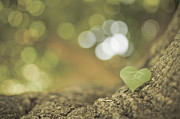 Clover Prints - Green Clover Upon Bark Of Tree Print by Gil Guelfucci