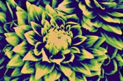 Canon  Digital Art - Green Dahlias by Cathie Tyler
