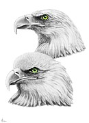 Eagles Drawings - Green Eagles by Murphy Elliott