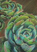 Plants Pastels Posters - Green Echeveria Poster by Athena  Mantle