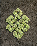 Botanical Reliefs Metal Prints - Green Endless Knot Metal Print by Karl Seitinger