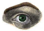 Sight See Prints - Green Eye Print by Science Source