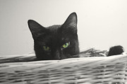 Black And White Cats Pastels - Green Eyes by Bernadette Kazmarski