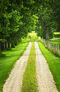 Country Driveway Photo Posters - Green farm road Poster by Elena Elisseeva