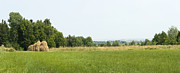Vlad Baciu Art - Green field panorama by Vlad Baciu