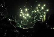 Green Fireworks Over A Soft Tail Print by Tobey Brinkmann