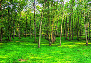 Hdr Photography Pastels - Green Floored Forest by Jackie Novak