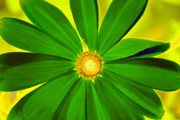 Blooming Digital Art - Green Flower by David Lee Thompson