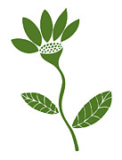 White Flower Drawings - Green Flower by Frank Tschakert