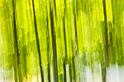 Abstraction Photo Posters - Green forest abstract Poster by Elena Elisseeva