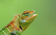 Mouth Open Prints - Green Forest Lizard Print by Saranga Deva De Alwis