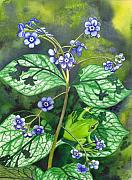 Forget Me Not Paintings - Green Frog by Catherine G McElroy