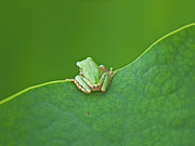 Water Lily Photos - Green Frog by Susanne Bund