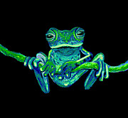 Frog Mixed Media Posters - Green Ghost Frog Poster by Nick Gustafson