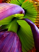 Bananas Originals - Green Gold by Sarita Rampersad