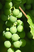 Food And Beverage Photo Originals - Green grape by Igor Sinitsyn
