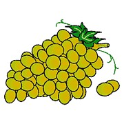 White Grape Prints - Green Grapes Print by Wolfgang Herzig